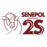 Senepol 2S